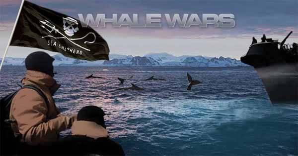 Sea Shepherd La guerra de las ballenas, animal planet