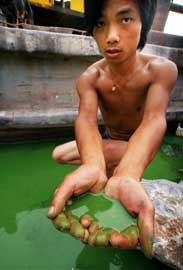 alga verde en el agua entre las manos
