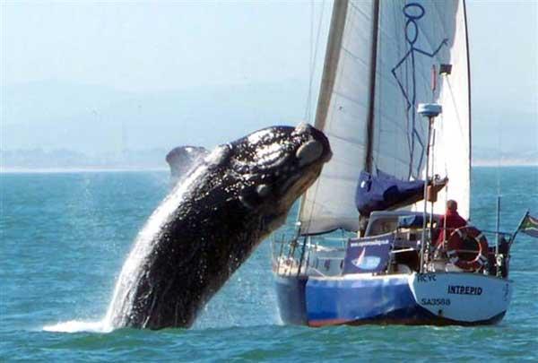 ballena cae sobre yate