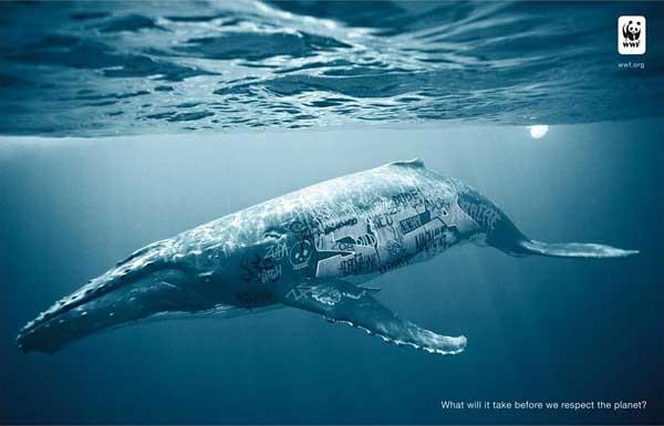biodiversidad wwf, ballena jorobada