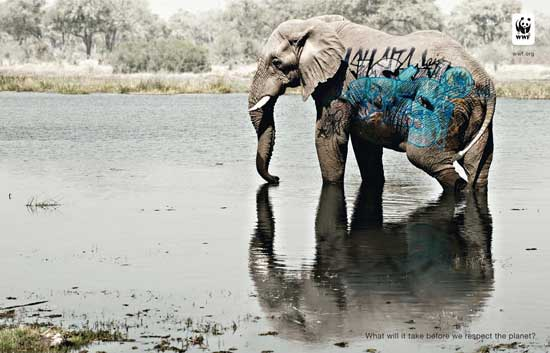 biodiversidad wwf, elefante