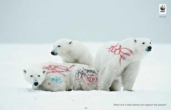biodiversidad wwf, osos polares