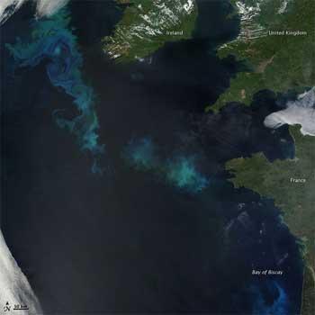 bloom fitoplancton Atlántico Norte