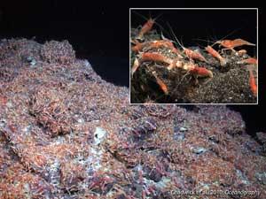 camarón en volcán o fumarola oceánica