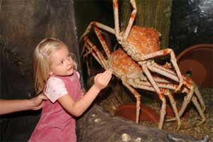 cangrejos araña y niña