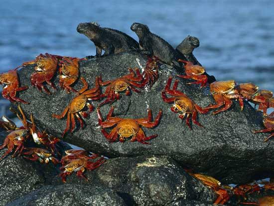 cangrejos e iguanas
