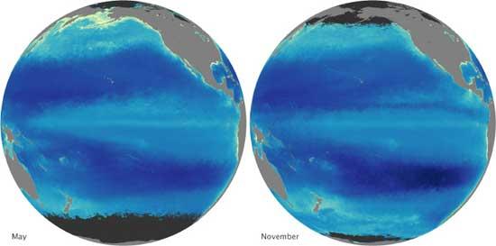 concentración de clorofila en el Océano Pacífico, mayo-noviembre