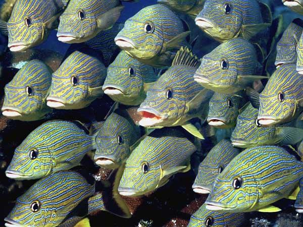 conjunto peces posando ante la cámara
