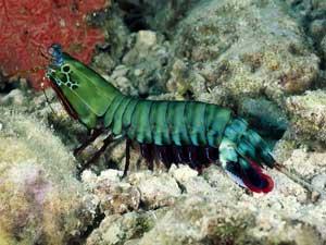 crustáceo en verde