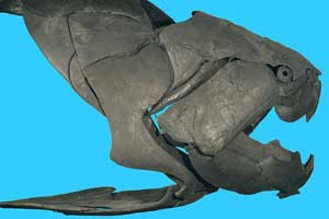 Dunkleosteus terrelli