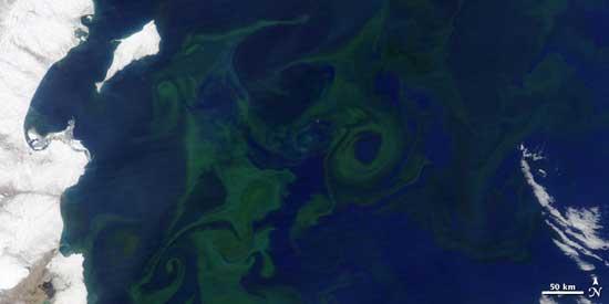 fitoplancton en las costas de kamchatka