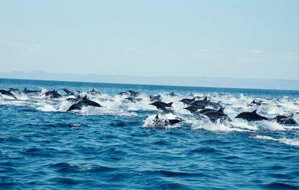 grupo de delfines en el mar