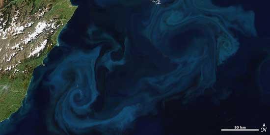 explosión de fitoplancton en el océano, frente costas de Nueva Zelanda