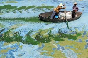 pescadores chinos navegan en un colorido mar de algas