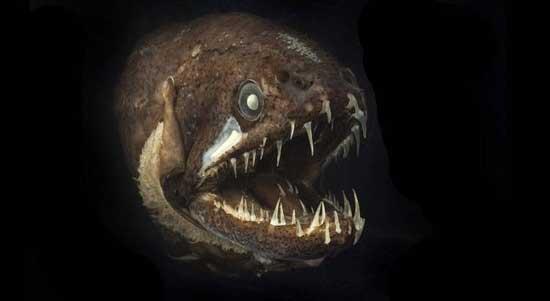 pez dragón de las profundidades