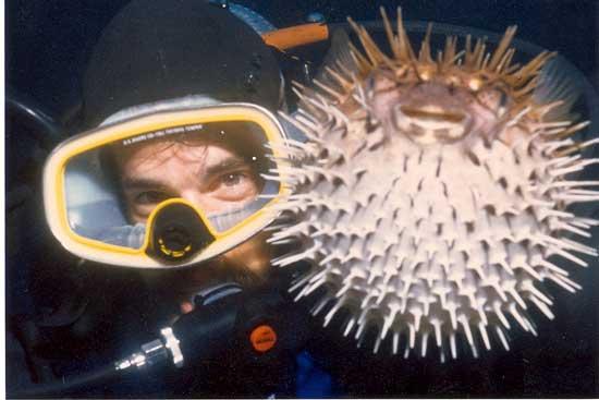 pez globo y buzo