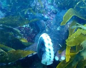 tentáculo del pulpo se lanza a por la cámara