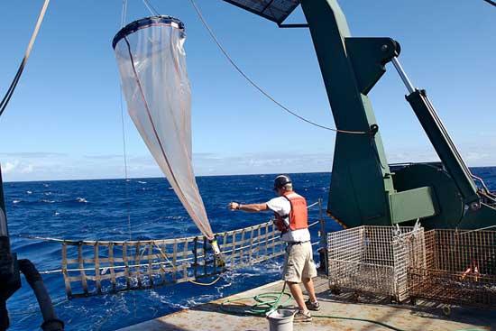 red de plancton oceánica