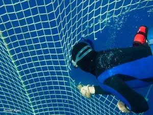 submarinista de Sea Shepherd corta red atún
