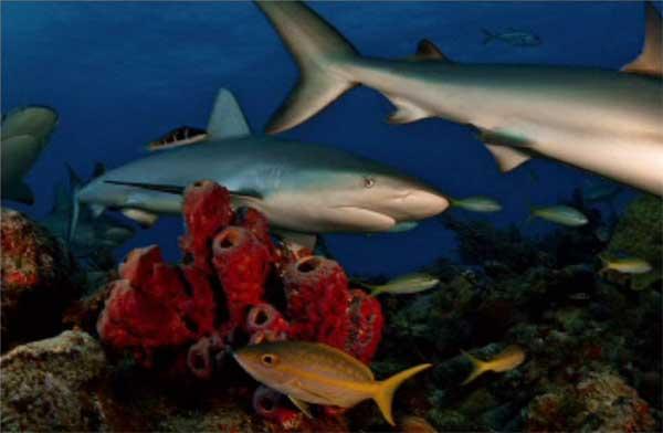 tiburones como en una pintura
