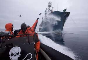 acoso a ballenero japonés por Sea Shepherd