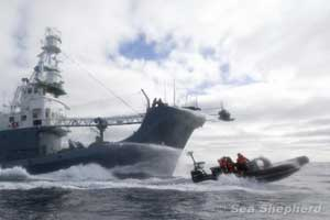 acoso a ballenero por Sea Shepherd