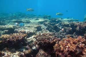 arrecife de coral, Queensland