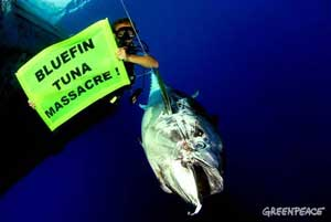 campaña atún rojo, Greenpeace