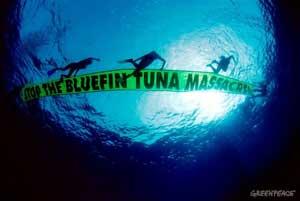 atún rojo, pancarta bajo el agua, Greenpeace