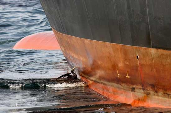 ave petroleada junto al casco de un barco