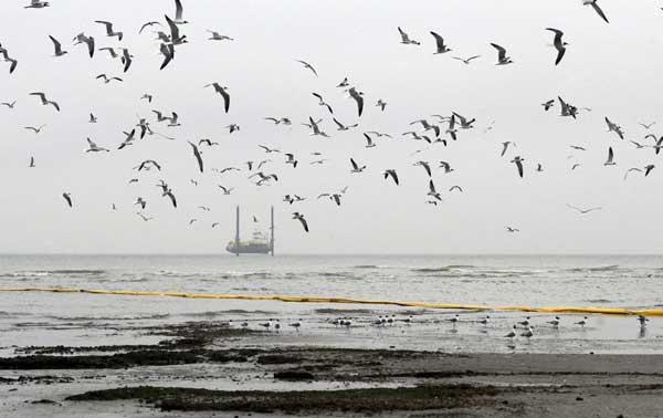 aves costeras en Isla Breton, Lousiana