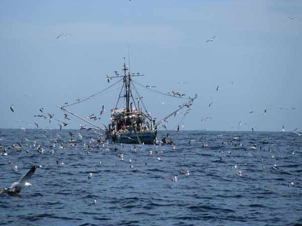 aves marinas pescando