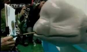 ballena beluga pintora