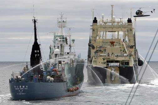 batalla barcos con cañones de agua