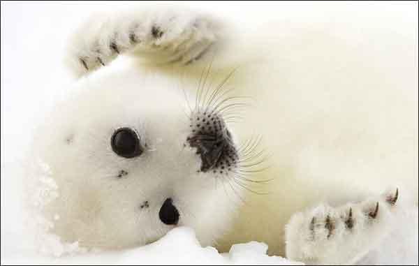 bebe foca, 2010