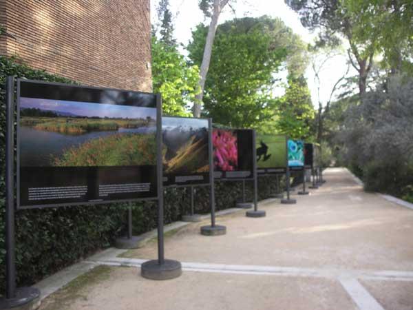 Biodiversidad en España, murales