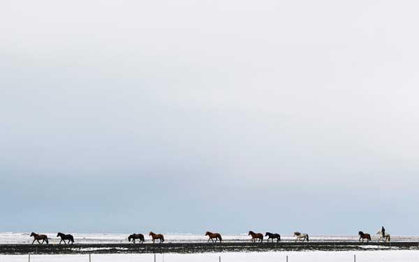 caballos cerca del volcán Eyjafjallajökull