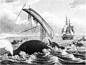 caza de ballenas en el Labrador