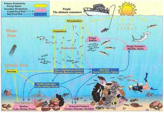 ciclo de vida en los arrecifes artificiales