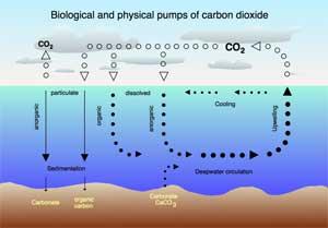ciclo del CO2 en el océano