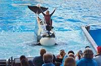 Dawn Brancheau, entrenadora orcas Orlando