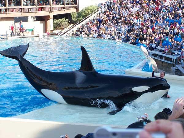 Espectáculo con orcas, Seaworld, Dawn Brancheau