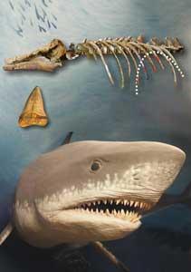 esqueleto de delfín y tiburón Cosmopolitodus hastalis