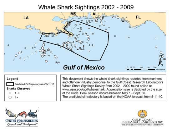 habitat del tiburón ballena, Golfo de México