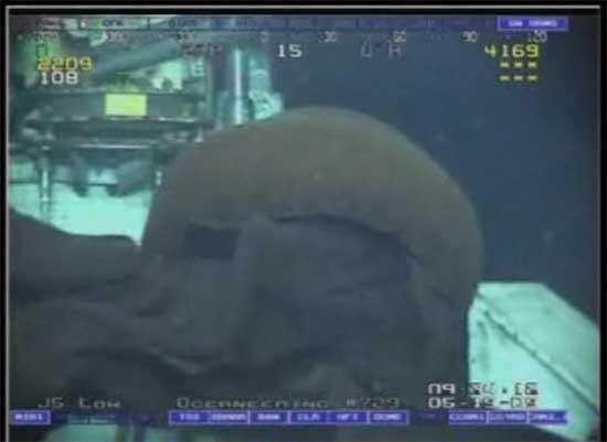 medusa gigante golfo de México