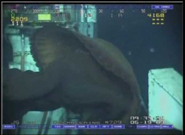 medusa gigante golfo México