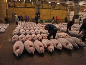 mercado, lonja de atún en Japón