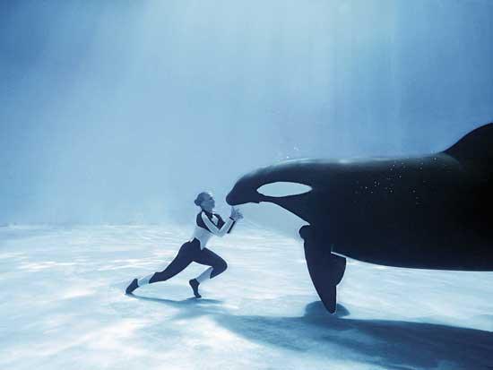 orca, Marine Adventure Park
