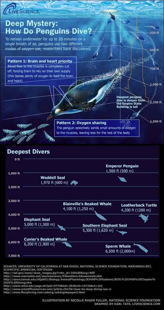 buceadores más profundos océano