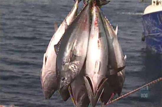 pesca atunes amparada por cites